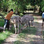 vervoer per ezel